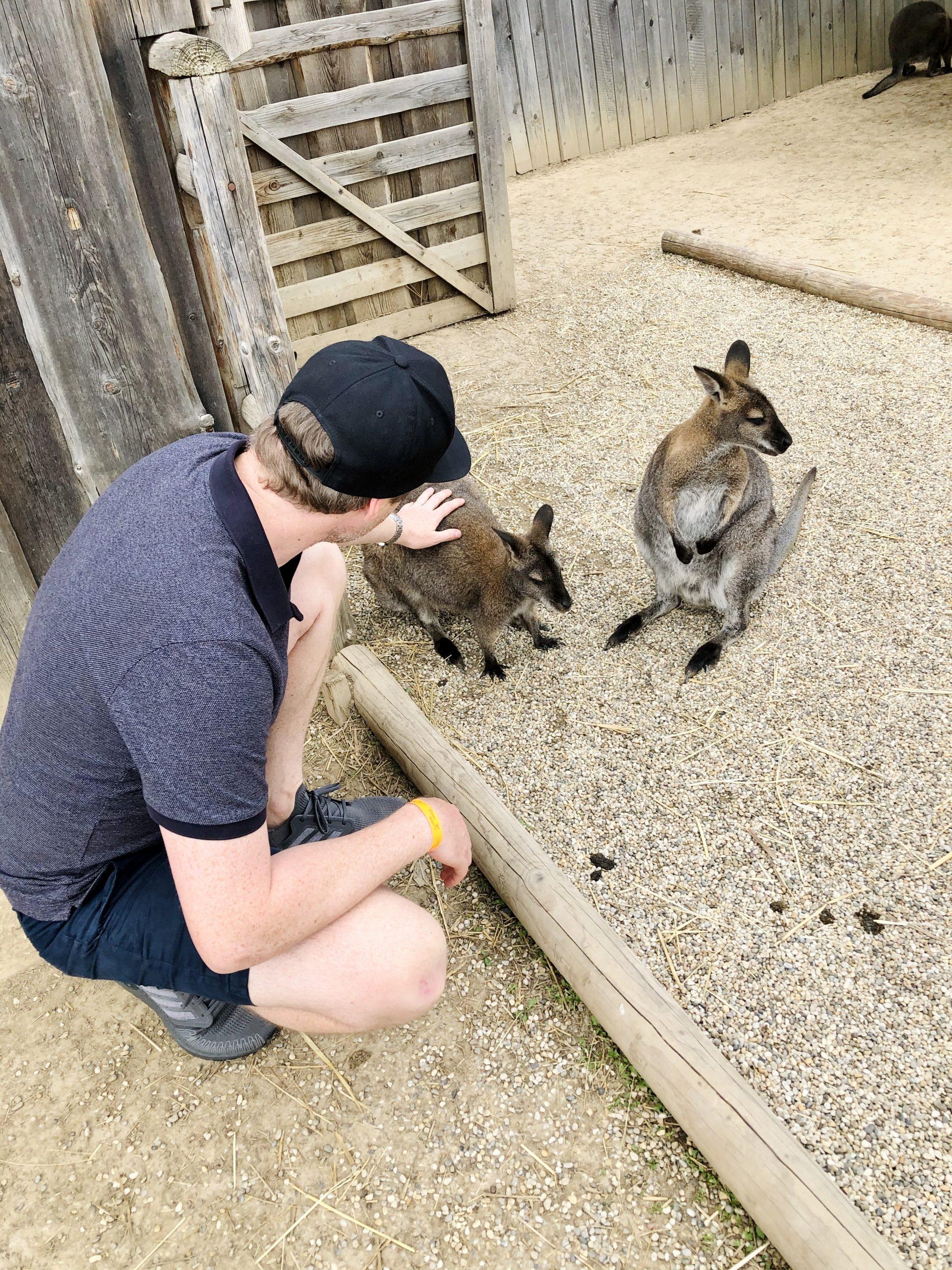 zoo kontakt mini farma