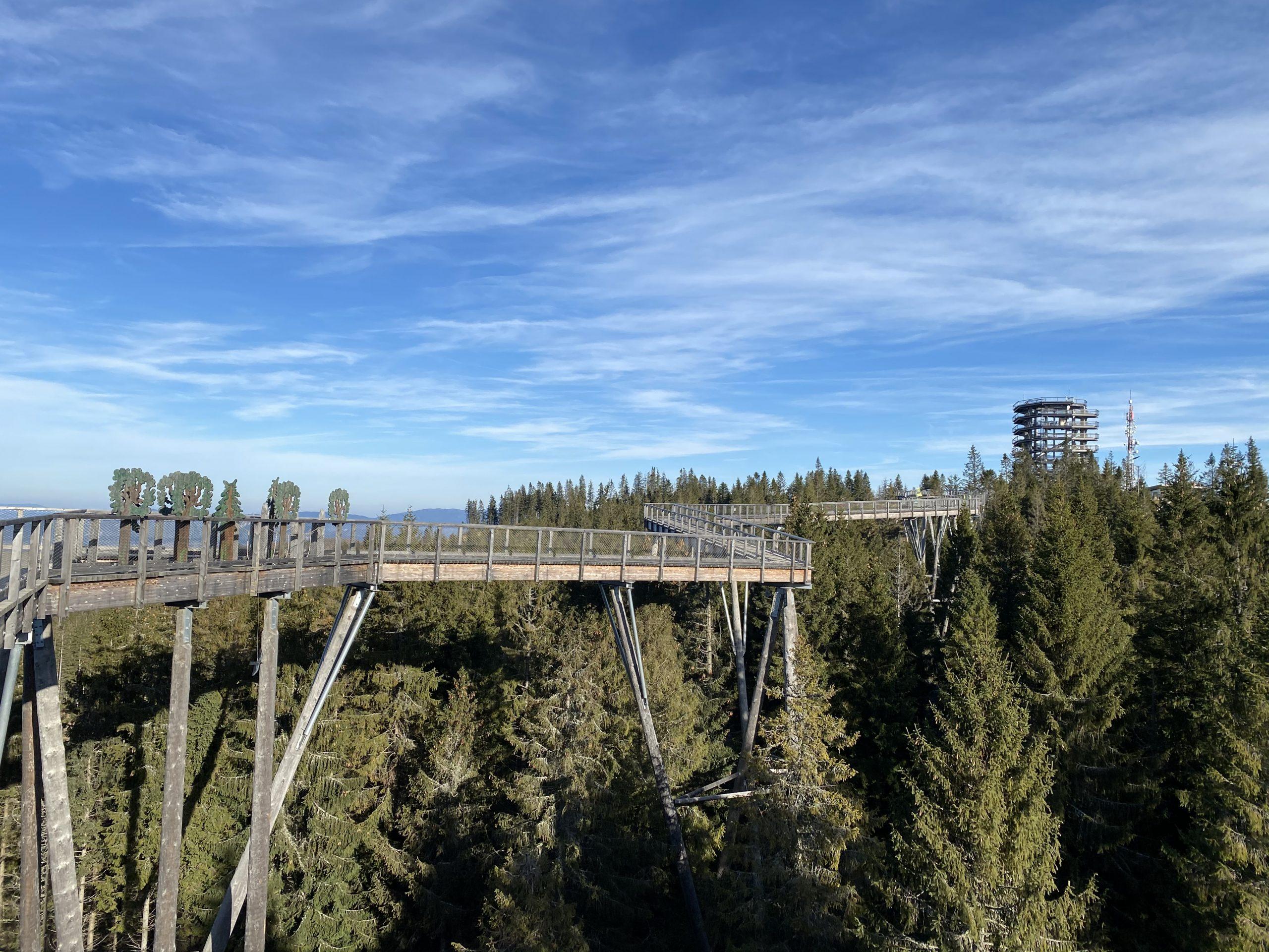 chodnik korunami stromov bachledova dolina